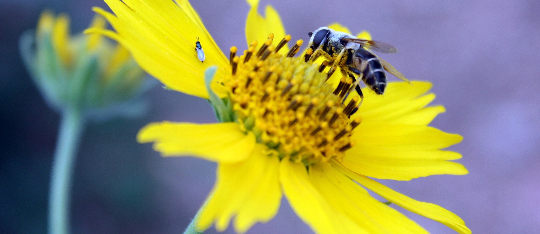Bee_CC